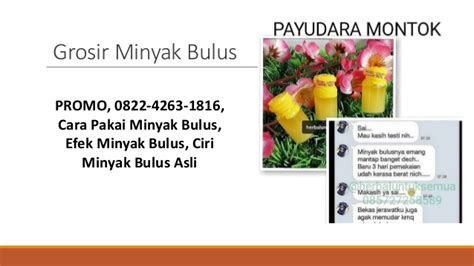 Minyak Bulus Mamasean Di Apotik promo 0822 4263 1816 jual minyak bulus minyak bulus original kegu