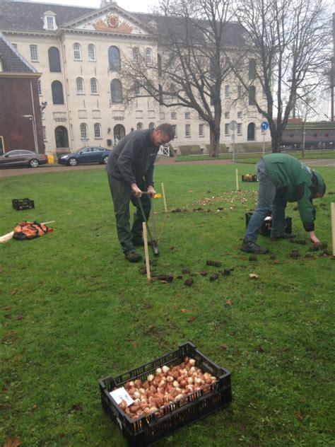 plantadores de bulbos tulip festival plantadores bulbos