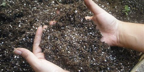 living color garden center how to get spectacular soil living color garden center