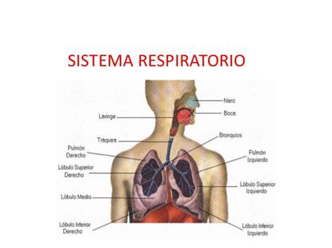 imagenes del sistema respiratorio ingles imagenes de las partes del aparato respiratorio imagui