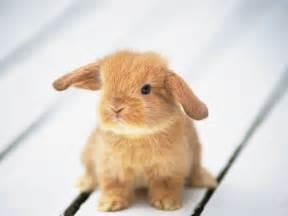 baby bunny baby animals photo 19794543 fanpop
