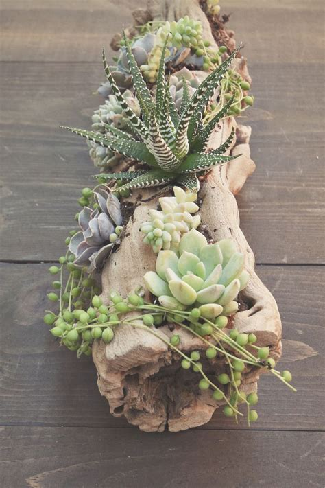 25 best ideas about hanging succulents on pinterest succulent wall succulents garden and