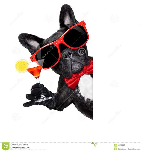 cocktail dogs cocktail stock photo image 50778242
