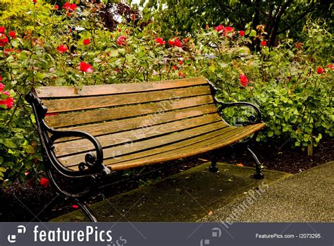 nature landscapes  park bench  rose garden stock