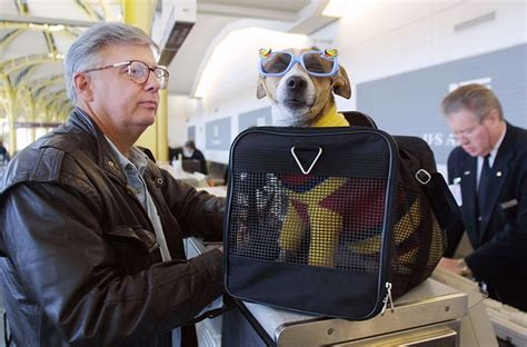 United Airlines In Cabin Pet Policy by Best Pet Friendly Airlines In The Us