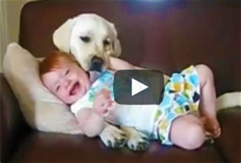 babies laughing at dogs babies laughing at dogs hysterically