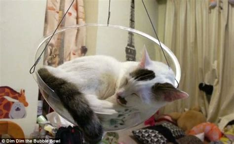 swings katze the 163 30 bowl chair for cats daily mail