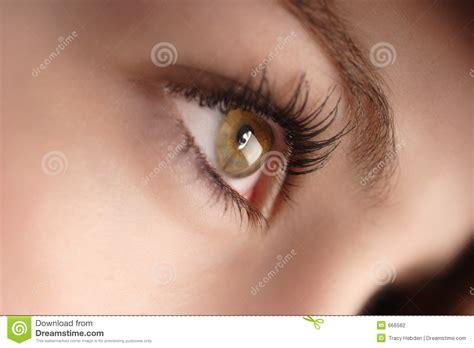 imagenes ojos pardos ojos pardos fotograf 237 a de archivo imagen 666562