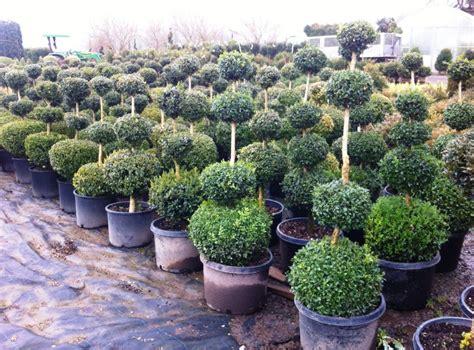 sempreverdi da giardino piante sempreverdi da giardino decorazioni per la casa