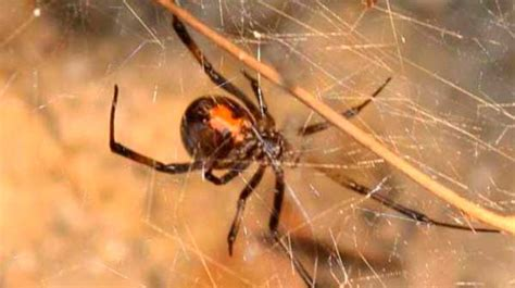 how to get rid of basement spiders how to get rid of spiders