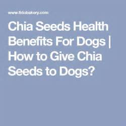 are chia seeds for dogs 673 best glad to things images on hacks products
