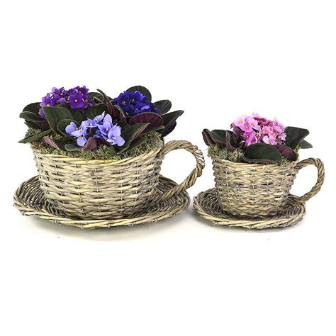 Teacup Planters by Set Of Two Willow Teacup Planters By Plant Theatre