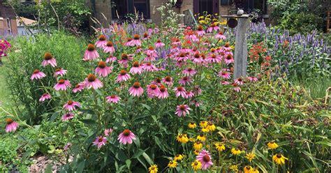 turn  yard   micro prairie  native plants