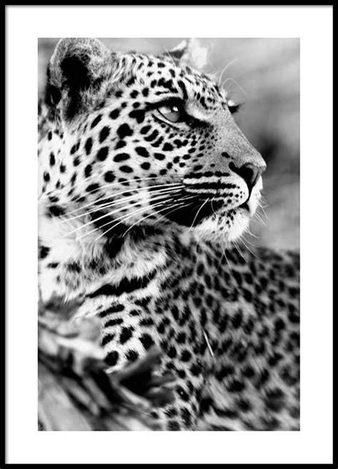 Tentures murales, tapis photo poster animal lion tigre art