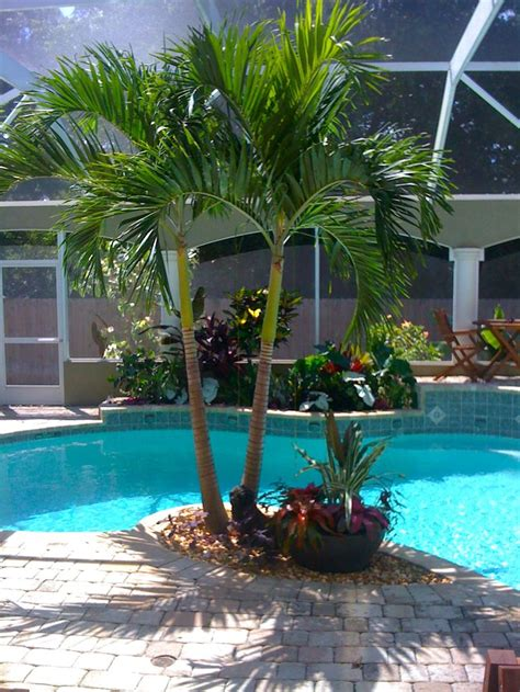 best 25 tropical pool landscaping ideas on pinterest pool landscaping plants tropical