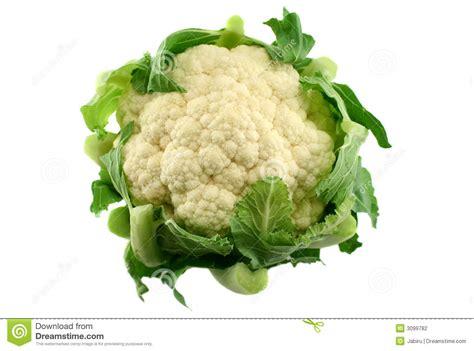 Cauliflower Fresh fresh cauliflower 3 stock photography image 3099782
