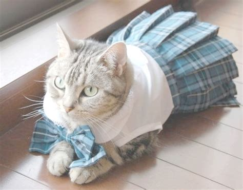 cat clothes what if cats wore clothes
