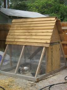 raising chickens keeping chickens in your backyard