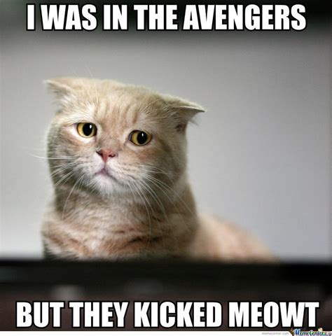 Sad Kitty Meme - sad cat meme www pixshark com images galleries with a