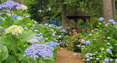 Botanical Garden Norfolk by Norfolk Botanical Garden