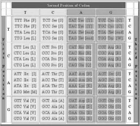 tabla de numeros mayas del 1 al 5000 labocommx numeros mayas del 1 hasta el 1000 completos imagui