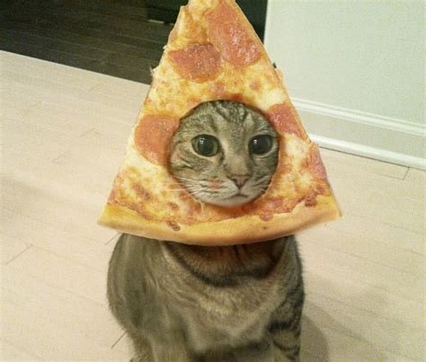 Cat Meme Faces - pizza cat face memes are on the rage