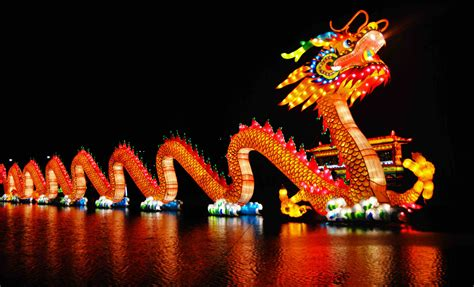 chinese new year dragon 9to5animations com