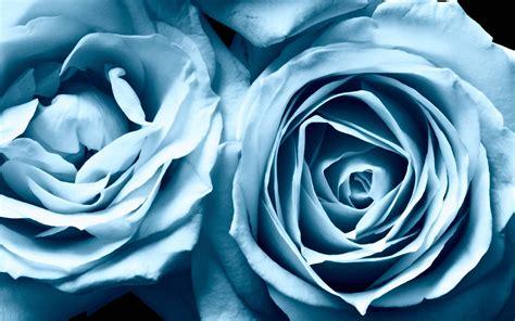 wallpaper adidas biru blue roses wallpapers wallpaper cave