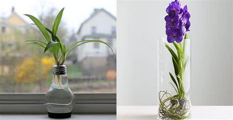 Indoor Water Garden by Ask Forget Indoor Water Garden The How To Guide To