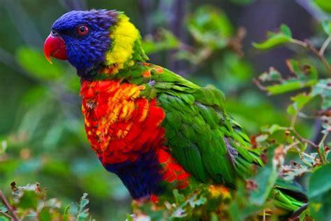 colorful parrots colorful parrot birds images photos wallpapers