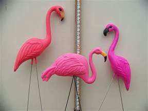 pink flamingos flamingos