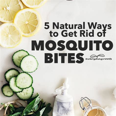 5 ways to get rid of mosquito bites herbs and