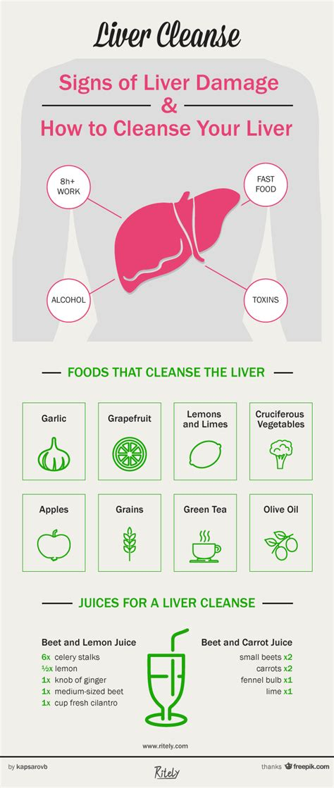 Liver Cleansing Detox Symptoms by Liver Cleanse Signs Of Liver Damage And How To Cleanse