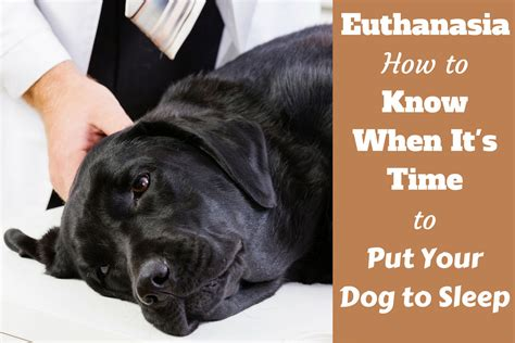 when to put your euthanasia how to when it s time to put your