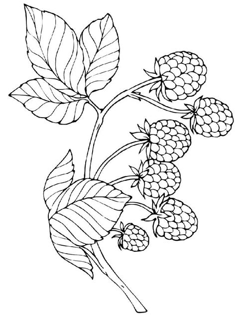 free printable raspberries coloring pages for kids