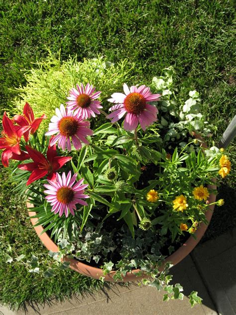 Perennial Planters by Dr Dan S Garden Tips Perennials In A Pot