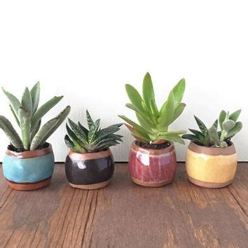 plants for small pots best pots for succulent products on wanelo