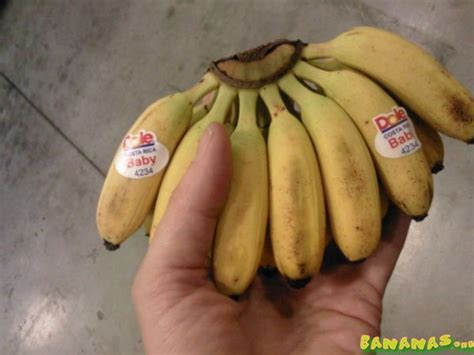 tiny banana name super small bananas bananas org