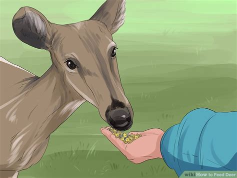what can i feed the deer in my backyard what can i feed the deer in my backyard 100 images wildlife first aid how to feed