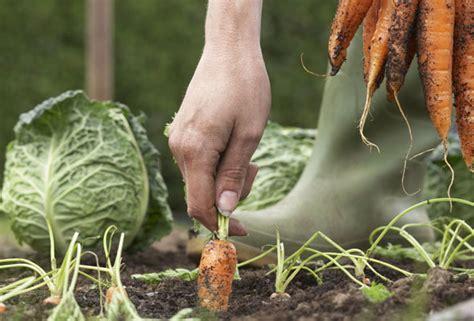 Organic Vegetable Gardening For Beginners 7 Tips You Organic Vegetable Gardening For Beginners