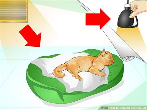 how to make a cat comfortable when dying how to comfort a dying cat