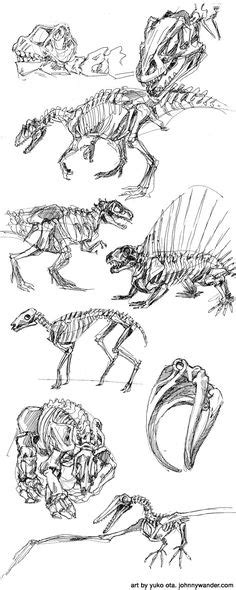 3d Copy And Draw Dinosaurs And 1000 ideas about dinosaur drawing on dinosaur