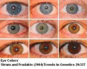 types of eye colors 193 best images about science inherited acquired