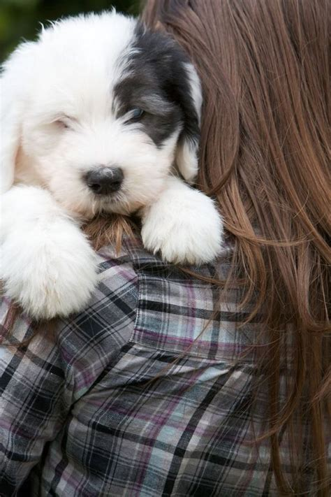 best dog breeds for families pets4homes top 10 best dog breeds for a family with kids dog breeds
