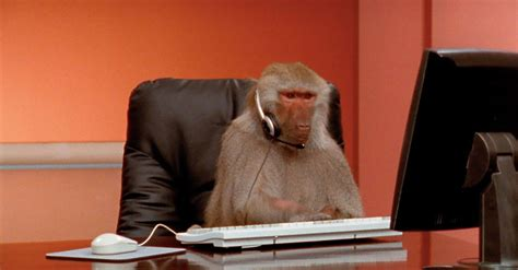 stock footage  baboons  work prompts perfect memes