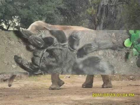 imagenes del animal weta animales del zool 243 gico de c 243 rdoba youtube