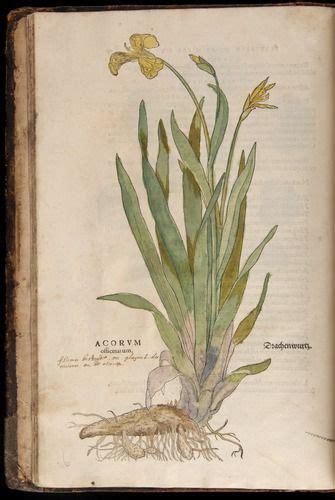 libro leonhart fuchs the new 4247 besten botanik bilder auf botanische illustration vintage abbildungen und natur