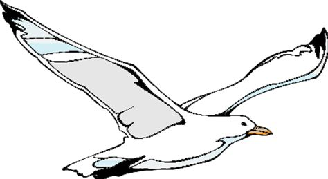 drawings of a sea bird clipart best clipart seagull jaxstorm realverse us