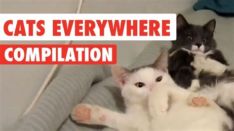 Home Decor Liquidators Locations by Top 28 Cat Everywhere Cat Mouse Stock Photos And