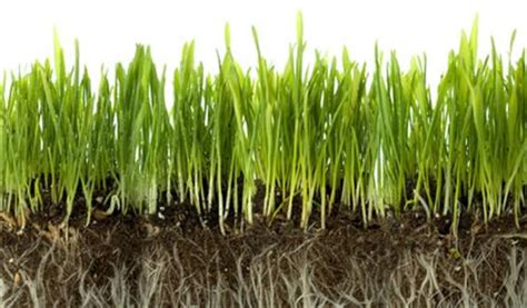 grass roots landscaping turf grass atlanta landscaping company